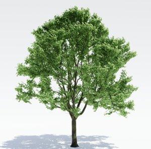 tree alder model