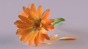 calendula plant petals flower 3D model