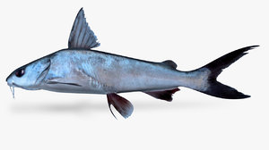3D cominant sea catfis
