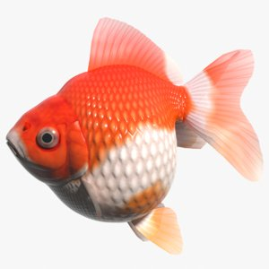 fish goldfish ping-pong 3d model