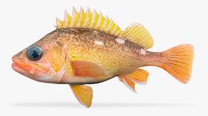3D honeycomb rockfish