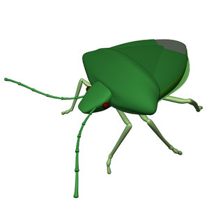 stinkbug stink bug 3D model