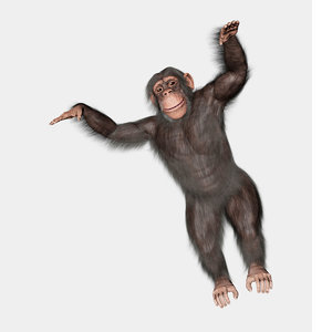 3D chimpanzee chimp
