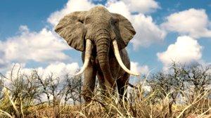 elephant nature 3D