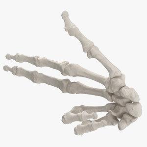 3D human hand bones white