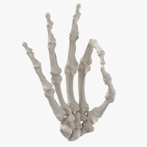 human hand bones white 3D model