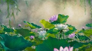 flower 3D