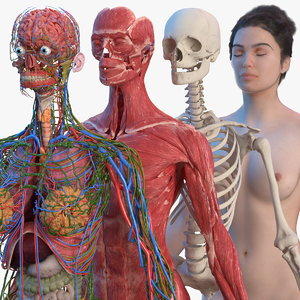 3D complete female body anatomy