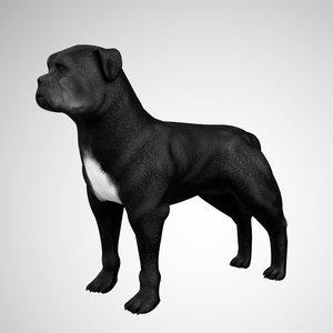 3D pitbull rigged model