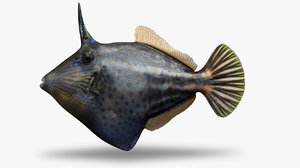 orangespotted filefish 3D model