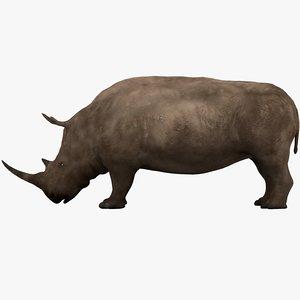 rhino rhinoceros animal model