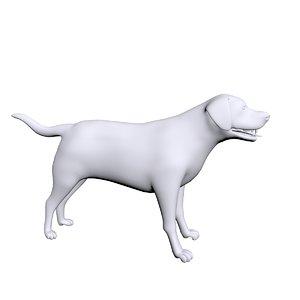 3D labrador labra