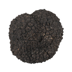 3D photorealistic scanned truffle