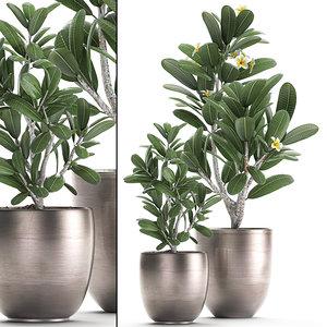 3D ornamental plants interior model