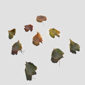 3D model dry linden leaves pack