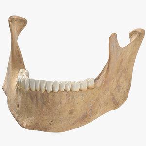 3D human jawbone mandible 01