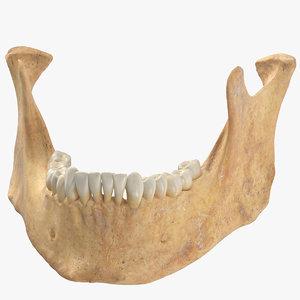 human woman jawbone mandible 3D