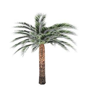 dates palm tree 3D