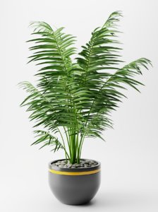 plant indoor nature 3D
