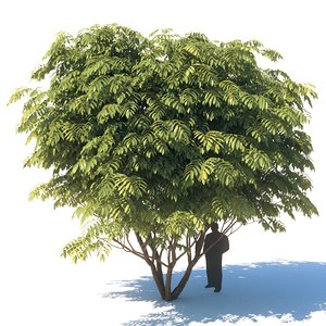 manchurian tree 3D model