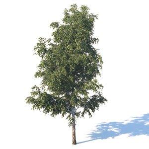 3D meter birch