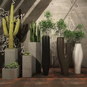 plants ficus flowerpot 3D model