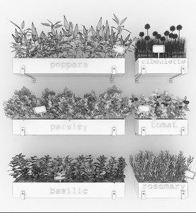 plants ficus 3D model