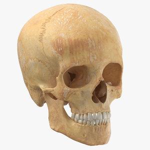 real human woman skull 3D