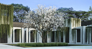 3D star magnolia