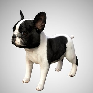 bulldog french cute 3D