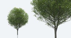 3D hornbeam trees nature