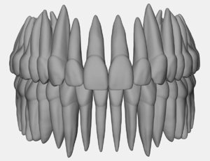 3D model azure upper lower jaw