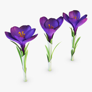 flower crocus violet v 3D model