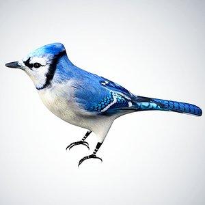 3D model bluejay jay blue