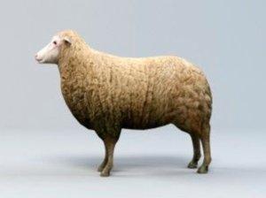 3D model sheep animal