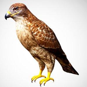 3D model hawk eagle