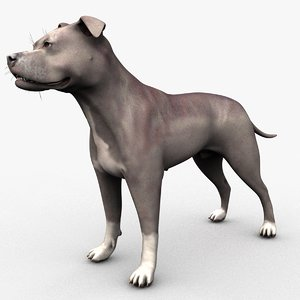 3D male blue american pitbull dog model
