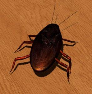 3D model roach cockroach