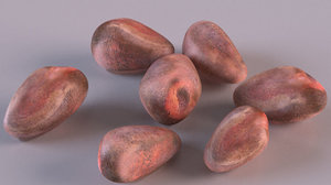 cedar pine nuts tree 3D model
