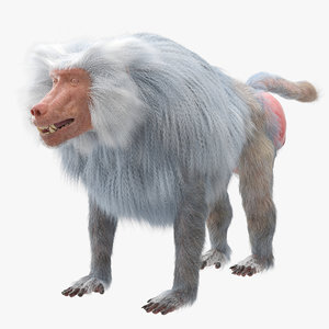 baboon realistic ornatrix 3D model