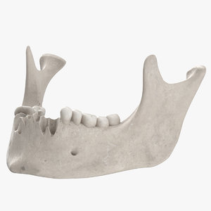 3D real human jawbone mandible model