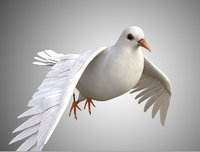 Realistic Rigged High Detailed Low Poly Dove