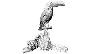 toucan bird model