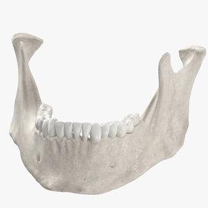 3D human woman jawbone mandible