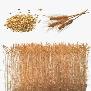 3D wheat 2 model