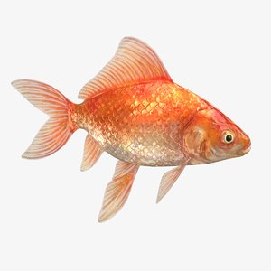 3D goldfish context scene animations