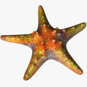 starfish star fish 3D