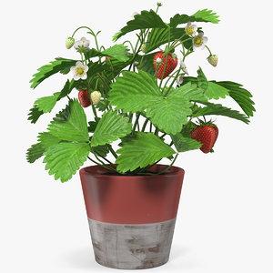 3D strawberry plant fruits pot