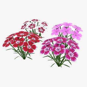 flower dianthus model