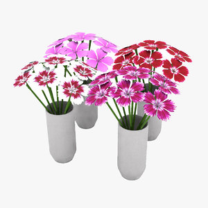 3D dianthus flower model